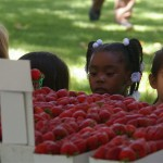 Kids eying the strawberries